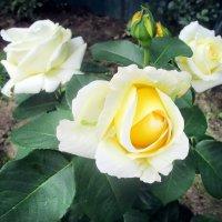 Цветок надежды и любви :: Ольга Довженко