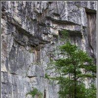 Абхазия :: Михаил Розенберг