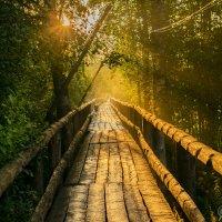 Пешеходный  мост :: Владимир Ефимов