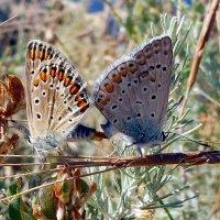Чтобы бабочек был больше :: Александр Чеботарь
