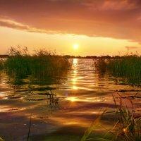 горячее солнце :: Elena Wymann