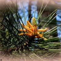 Весна :: Нина Бутко