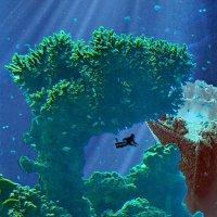 Коралловый сад :: irina Schwarzer