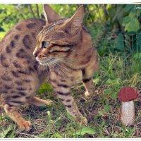 Тихая охота Маргуси :: muh5257
