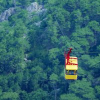 Над деревьями :: Светлана Карнаух