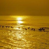 море :: олег добрый