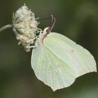 Цветы и бабочки :: Светлана