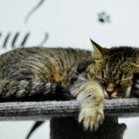 Котейня :: Кристина Бессонова
