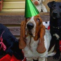 Винссент празднует днюху! :: Ирэна Мазакина