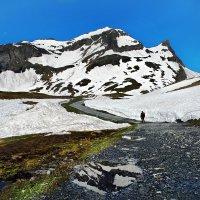 конец июня... или альпийское лето :: Elena Wymann