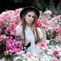Розарий модель Софья :: Grey