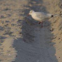 Птичий пляж :: Елена (Птичка Э)