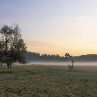 Рассвет на лугу :: Александр Крупский