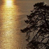 Золотое начало дня :: Павел Федоров