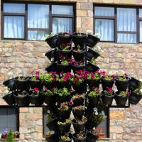 Flowers Cross :: Nikola Ivanovski