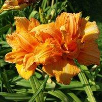 Солнечные цветы :: Наталья Владимировна