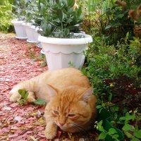 кот отдыхает :: Владимир