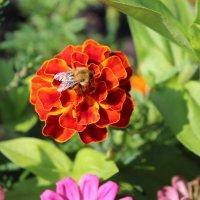 Пчелка на цветке :: Татьяна Са