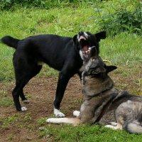 Мои собаки :: Александр Протопопов