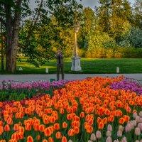 Про Питер и тюльпаны :: Владимир Колесников