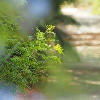 Тест объектива Canon 135/2.8 Soft Focus :: Alexander Amromin