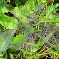 Паутина в росе в траве под ногами :: Нина северянка