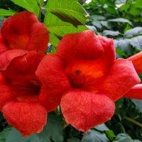 августовский цветок :: жанна janna