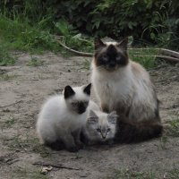 Кошачья семейка :: Наталья Жукова