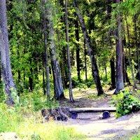 В Баболовском парке ЦС  2 :: Сергей