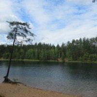 Лесное озеро :: Татьяна Гусева