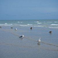 А на берегу  гуляю как могу.....:))) :: Валентина Папилова