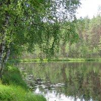 лесное озеро :: Галина