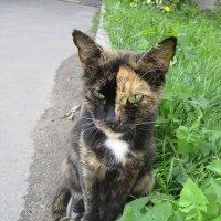 Кошка,которая гуляет сама по себе.. :: Зинаида