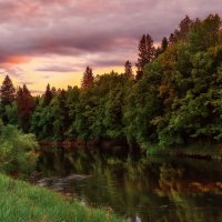 Лесная речка. :: Андрей Ермолаев