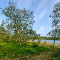 Природа северных озер :: Александр Силинский