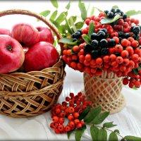 Август. Скоро яблочный спас.. :: Ольга Митрофанова