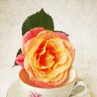 Роза. :: Victoria
