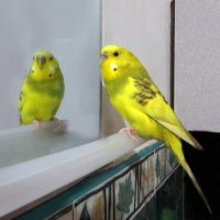 Свет мой зеркальуе, скажи... :: Наталья (D.Nat@lia)