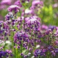 Пока цветут цветы, лето продолжается... :: Ирина Румянцева