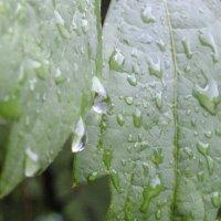 после дождя :: Алексей Кузнецов