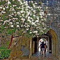 Толстые стены крепости :: Raduzka (Надежда Веркина)