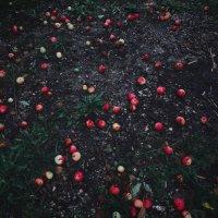 Красные яблоки на асфальте :: Ксения OKDMUSE
