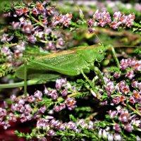 В траве сидел кузнечик..зелененький он был. :: Ольга Митрофанова