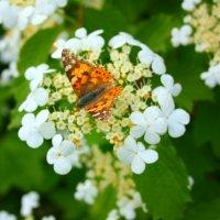 Влюбился в бабочку цветок... :: Людмила И.