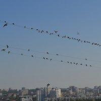 Новое поколение учится летать! :: Serg