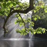 солнечные лучи в фонтане :: Ноэми Гольдберг