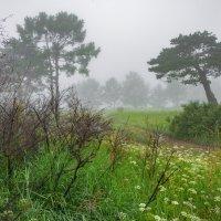 туман :: Дарья Молчанова