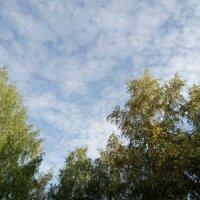 Мраморное небо августа... :: BoxerMak Mak