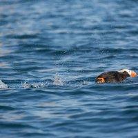 Скоростной бег по воде :: slavado