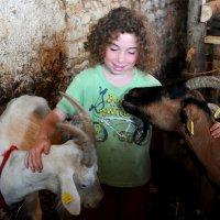 Девочка и козы :: Гала